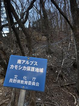 Kamoshika.JPG