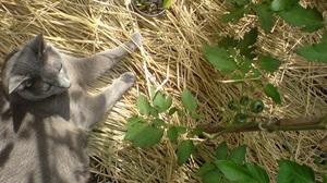 Tomato&cat.jpg